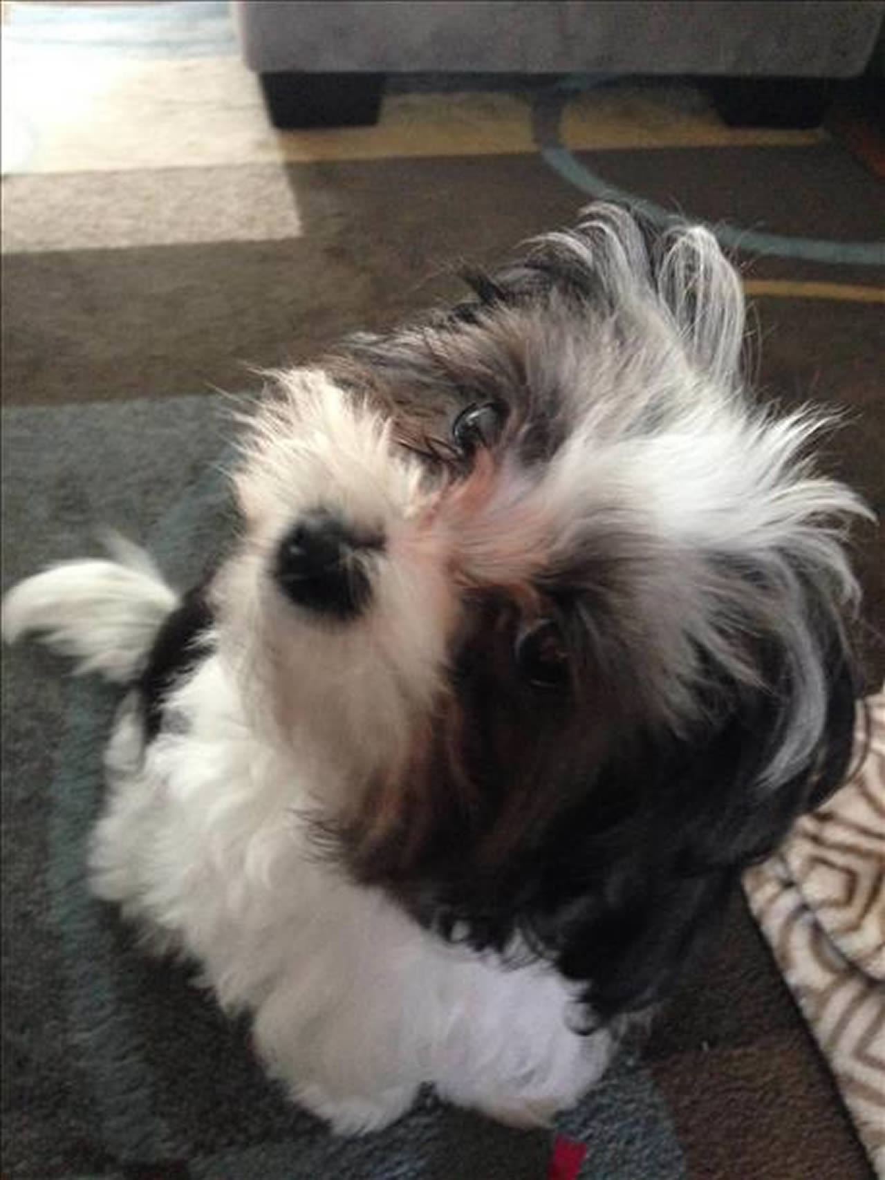"""<div class=""""meta image-caption""""><div class=""""origin-logo origin-image none""""><span>none</span></div><span class=""""caption-text"""">Meet Luna! ABC7 News viewers and staff are sending in photos of their dogs in honor of National Puppy day on March 23, 2015. (Photo submitted by Audrey Lee/uReport)</span></div>"""