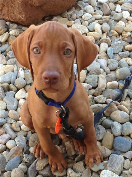 """<div class=""""meta image-caption""""><div class=""""origin-logo origin-image none""""><span>none</span></div><span class=""""caption-text"""">Meet Mo! ABC7 News viewers and staff are sending in photos of their dogs in honor of National Puppy day on March 23, 2015. (Photo submitted by Claudia Sanchez/uReport)</span></div>"""