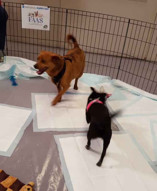 "<div class=""meta image-caption""><div class=""origin-logo origin-image none""><span>none</span></div><span class=""caption-text"">These two pups are available for adoption through the Friends of Alameda Animal Shelter. (KGO-TV)</span></div>"