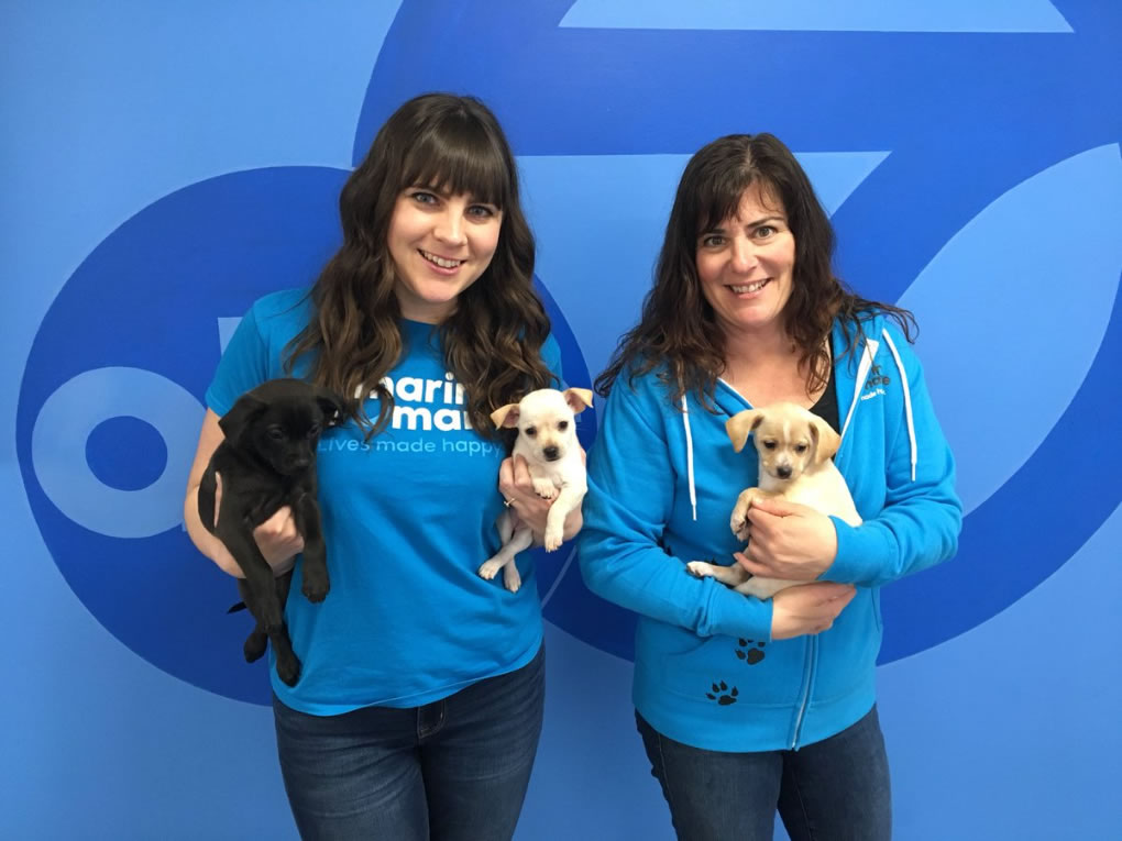<div class='meta'><div class='origin-logo' data-origin='none'></div><span class='caption-text' data-credit='KGO-TV'>The Marin Humane Society visited ABC7 in San Francisco for National Puppy Day on Friday, March 23, 2018.</span></div>