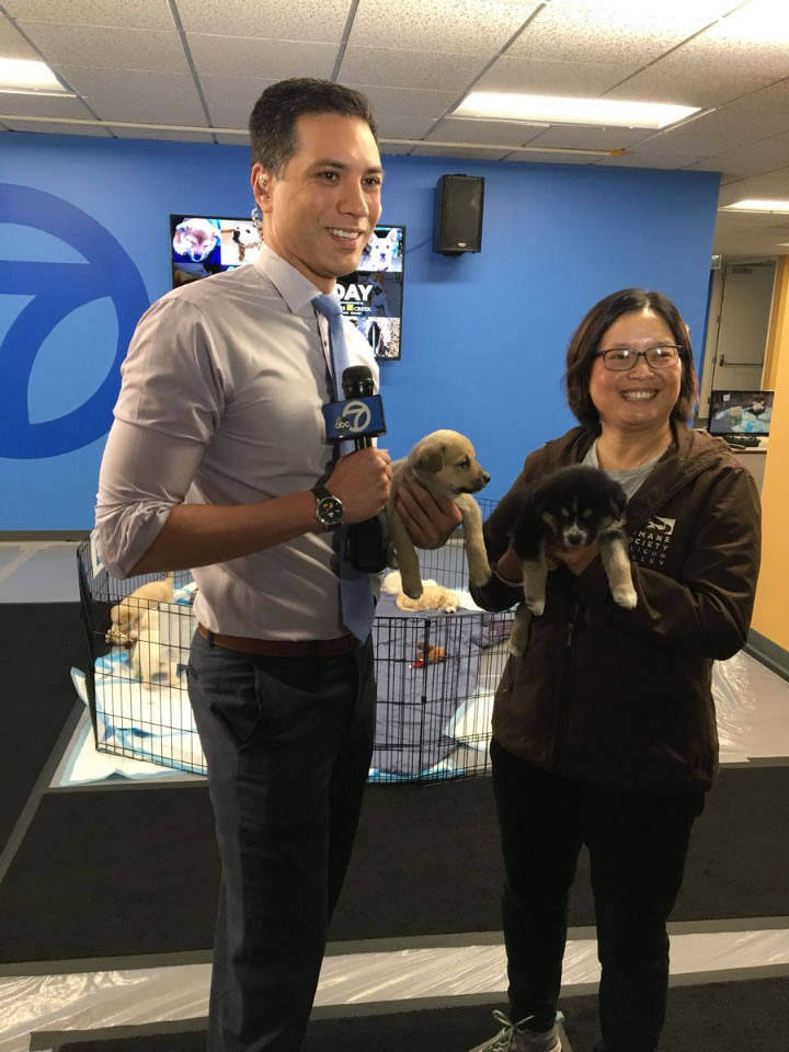 <div class='meta'><div class='origin-logo' data-origin='none'></div><span class='caption-text' data-credit='KGO-TV'>ABC7's Reggie Aqui speaks with the Humane Society of Silicon Valley for National Puppy Day in San Francisco on Friday, March 23, 2018.</span></div>