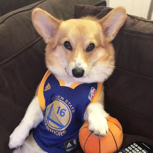 <div class='meta'><div class='origin-logo' data-origin='none'></div><span class='caption-text' data-credit='@chompersthecorgi/Instagram'>We want to see your fan pride Dub Nation, so tag your photos #DubsOn7 and we may feature them here or on TV.</span></div>