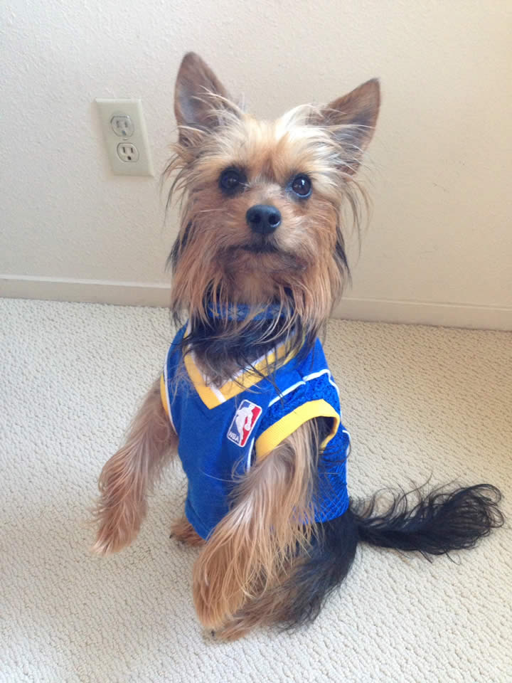 <div class='meta'><div class='origin-logo' data-origin='none'></div><span class='caption-text' data-credit='Photo sent to KGO-TV by Sara/uReport'>Golden State Warriors fans are showing off their #DubNation pride! Tag your photos on Facebook, Twitter, Google Plus, or Instagram using #DubsOn7!</span></div>
