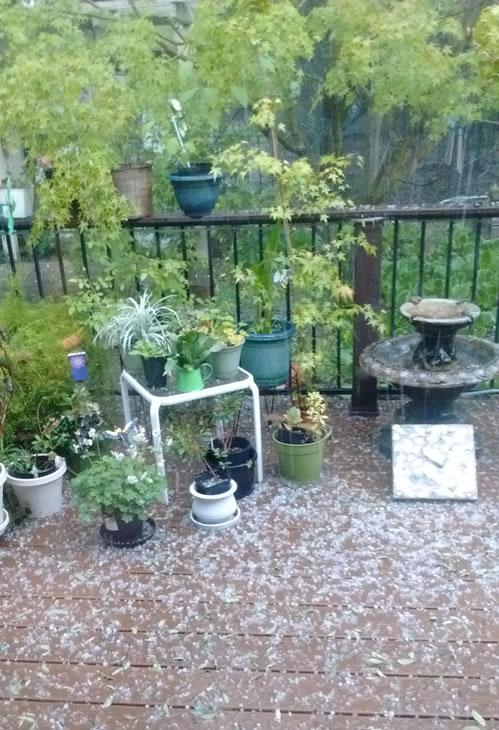 <div class='meta'><div class='origin-logo' data-origin='none'></div><span class='caption-text' data-credit='Photo submitted to KGO-TV by Stephen Mayer'>This image shows hail in Rancho Murieta, Calif. April 27, 2016.</span></div>