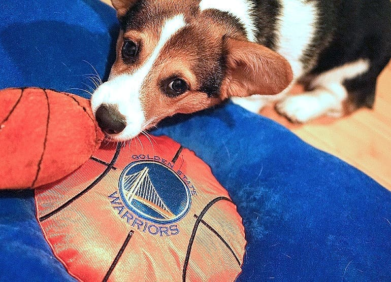 <div class='meta'><div class='origin-logo' data-origin='none'></div><span class='caption-text' data-credit='Photo submitted to KGO-TV by super_saiyan_otis_the_corgi/Instagram'>Warriors fans show their spirit during the 2017-2018 season. Share your photos using #DubsOn7 and you may see them online or on TV!</span></div>