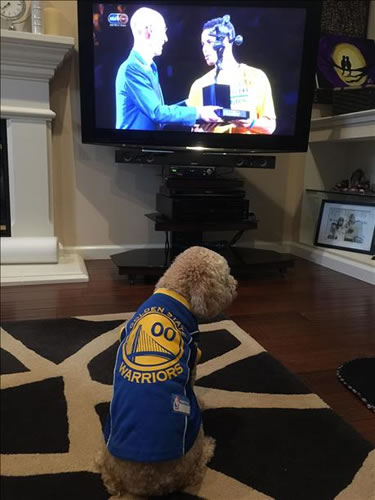 <div class='meta'><div class='origin-logo' data-origin='none'></div><span class='caption-text' data-credit='Photo submitted via uReport'>Linus the dog watches Stephen Curry receive the MVP award before Game 2. Tag your photos on Facebook, Twitter, Google Plus, or Instagram using #DubsOn7!</span></div>
