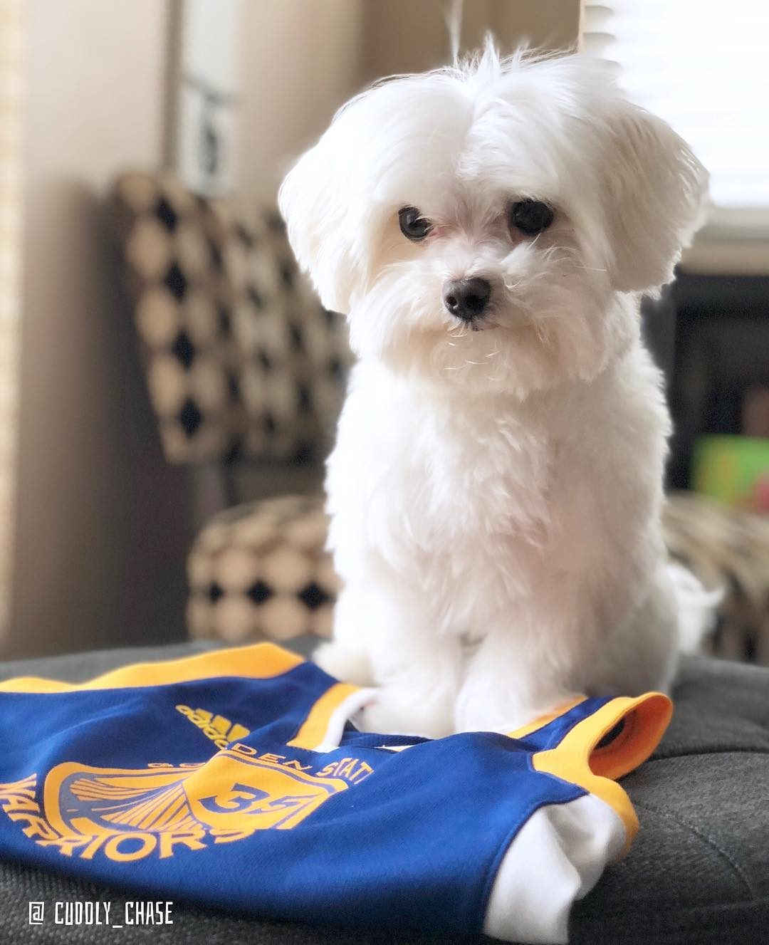 <div class='meta'><div class='origin-logo' data-origin='none'></div><span class='caption-text' data-credit='Photo submitted to KGO-TV by @cuddly_chase_Instagram'>Warriors fans show their spirit during the 2017-2018 season. Share your photos using #DubsOn7 and you may see them online or on TV!</span></div>
