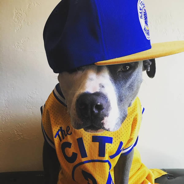 <div class='meta'><div class='origin-logo' data-origin='none'></div><span class='caption-text' data-credit='Photo submitted to KGO-TV by @everyone_loves_amos/Instagram'>We want to see your fan pride Dub Nation, so tag your photos #DubsOn7 and we may feature them here or on TV.</span></div>