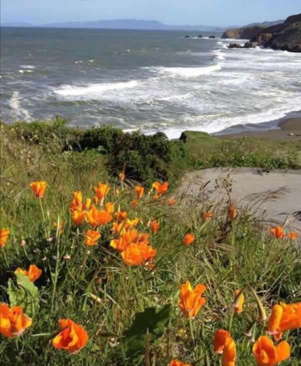"<div class=""meta image-caption""><div class=""origin-logo origin-image ""><span></span></div><span class=""caption-text"">Flowers are blooming along the coast at Rockaway Beach in Pacifica. (Photo submitted via uReport)</span></div>"