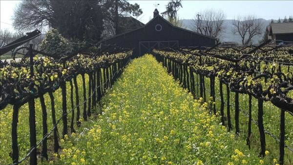 Spring in Napa Valley (Photo submitted via uReport)
