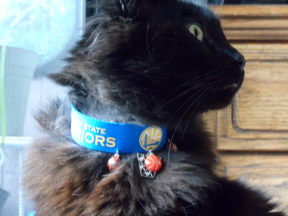 <div class='meta'><div class='origin-logo' data-origin='none'></div><span class='caption-text' data-credit='Photo submitted to KGO-TV by Bonnie H/Facebook'>This cool cat is also a huge Warriors fan. Tag your photos on Facebook, Twitter, Google Plus or Instagram using #DubsOn7.</span></div>