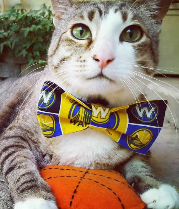 <div class='meta'><div class='origin-logo' data-origin='none'></div><span class='caption-text' data-credit='Photo submitted to KGO-TV by @pecanthenut/Instagram'>Pecan the Nut is seen wearing a Warriors bow tie on Sunday, May 21, 2017.</span></div>