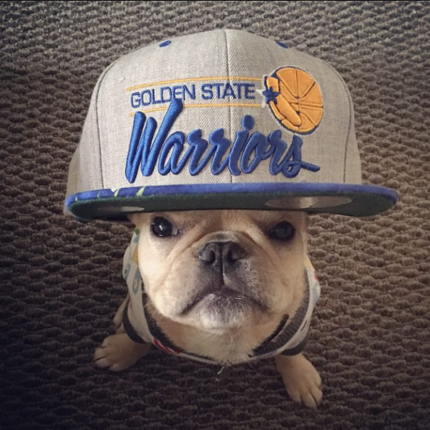 <div class='meta'><div class='origin-logo' data-origin='none'></div><span class='caption-text' data-credit='Photo submitted by @missmisaminnie/Instagram'>Brody Brixton is ready for the NBA Finals! Let's go Dubs! Tag your photos on Facebook, Twitter, Google Plus or Instagram using #DubsOn7.</span></div>