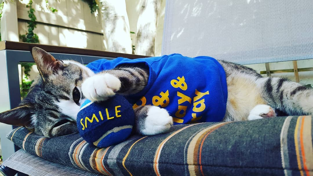 <div class='meta'><div class='origin-logo' data-origin='none'></div><span class='caption-text' data-credit='Photo submitted to KGO-TV by @pecanthenut/ Instagram'>Warriors fans show their spirit during the 2017-2018 season. Share your photos using #DubsOn7 and you may see them online or on TV!</span></div>