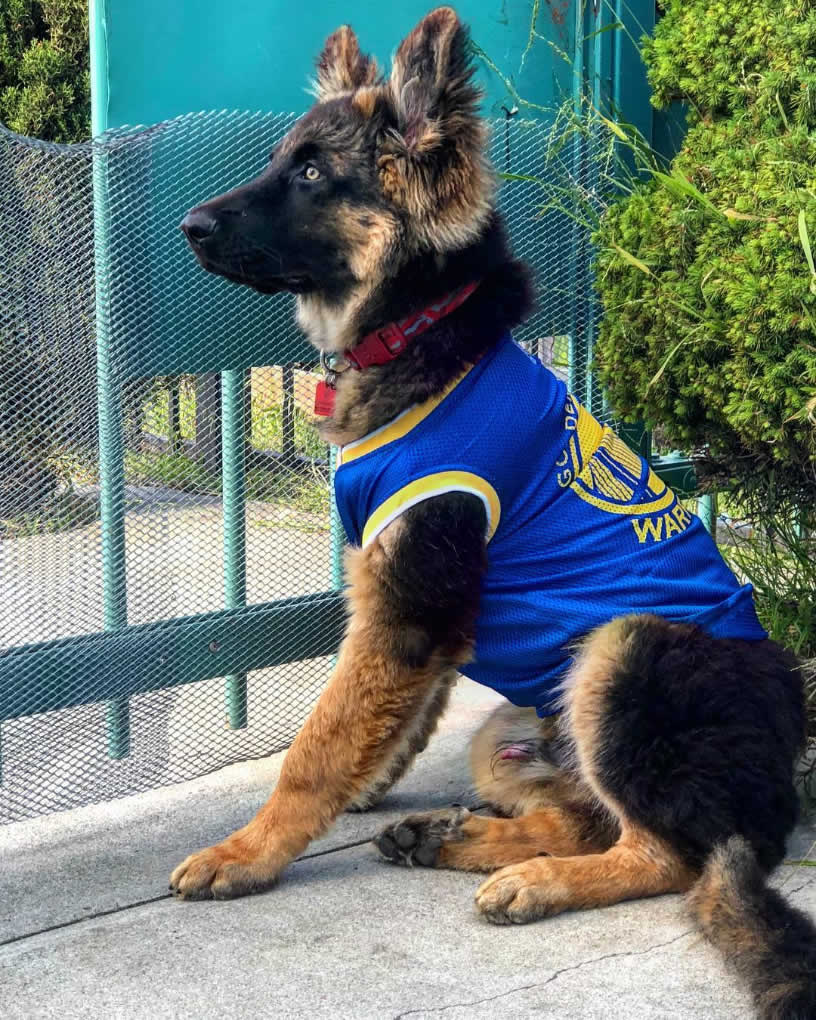 <div class='meta'><div class='origin-logo' data-origin='none'></div><span class='caption-text' data-credit='Photo submitted to KGO-TV by @thor.thegsd/Instagram'>Warriors fans show their spirit during the 2017-2018 season. Share your photos using #DubsOn7 and you may see them online or on TV!</span></div>