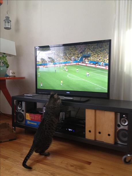 Cats watch the World Cup too. <span class=meta>photo submitted via uReport</span>