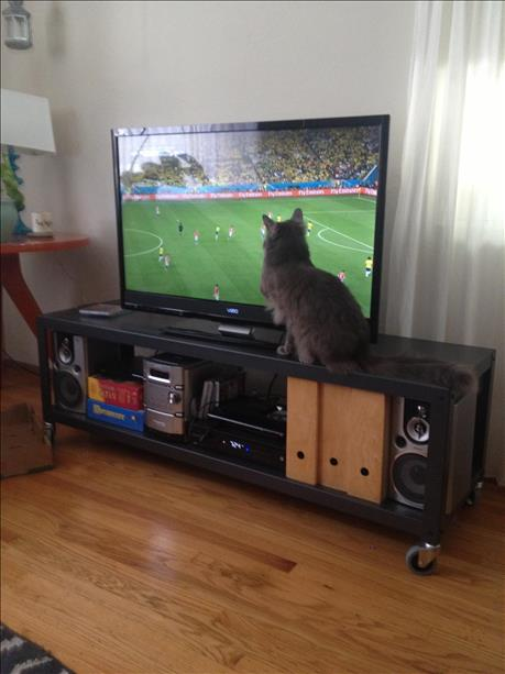 Cats watch the World Cup too. <span class=meta>(photo submitted via uReport)</span>