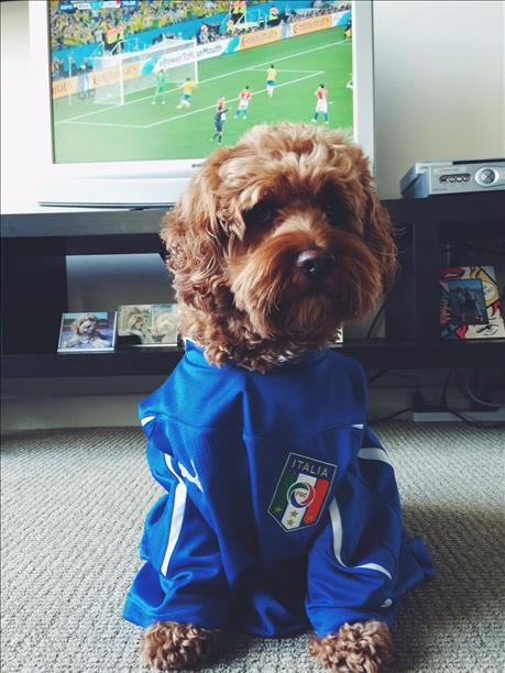 <div class='meta'><div class='origin-logo' data-origin='none'></div><span class='caption-text' data-credit='photo submitted via uReport'>Yogie from Oakland is a fan of the World Cup!</span></div>