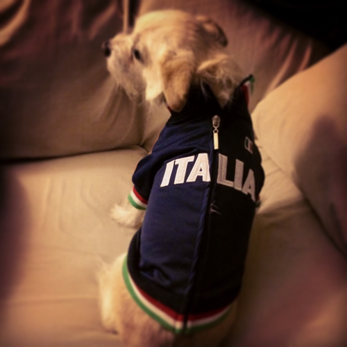 Italy all the way! World Cup celebrations are happening all around the Bay Area. Send your fan photos to uReport@kgo-tv.com! <span class=meta>(photo submitted via uReport)</span>