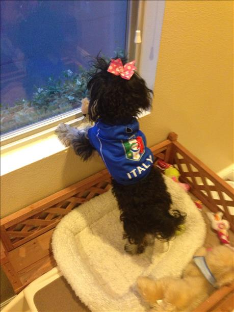 Hazel anxiously awaits Italy&#39;s next match!  World Cup celebrations are happening all around the Bay Area.  Send your photos to uReport@kgo-tv.com <span class=meta>(photo submitted via uReport)</span>