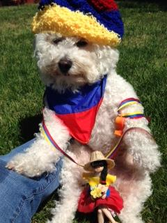 "<div class=""meta ""><span class=""caption-text "">Speedy Gonzalez Morieko, the doggie world cup fan, going for 3 teams, Colombia is one of them!  Keep sending in your World Cup fan photos! (photo submitted via uReport)</span></div>"