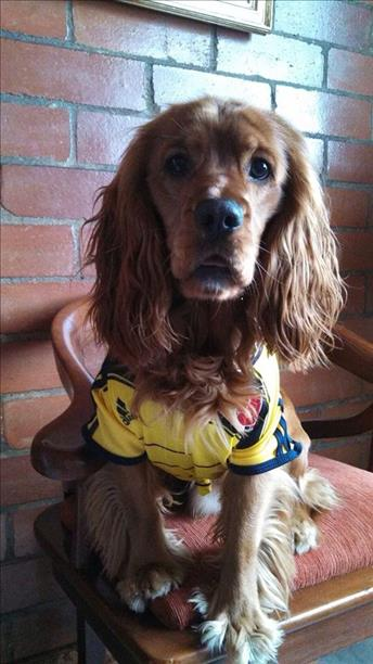 Maximiliano says, go Colombia!  Keep sending in your World Cup fan photos! <span class=meta>(photo submitted via uReport)</span>