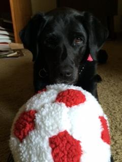 Guide dog Lorelle cheers for USA!  Keep sending in your World Cup fan photos! <span class=meta>photo submitted by Jan Robitscher via uReport</span>