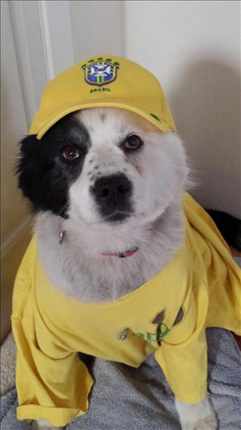 Patches is a Brazil fan.  Keep sending in your World Cup fan photos! <span class=meta>photo submitted by Lidia Dubon via uReport</span>