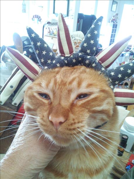 Debbie H.'s cat, Ricky, is meowing for USA!  Keep sending in your World Cup fan photos! <span class=meta>photo submitted by Debbie Henderson via uReport</span>