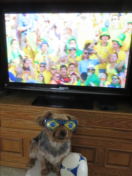 "<div class=""meta ""><span class=""caption-text "">Henri the silky terrier showing his World Cup Fever!  Keep sending in your World Cup fan photos! (photo submitted by Dorea via uReport)</span></div>"