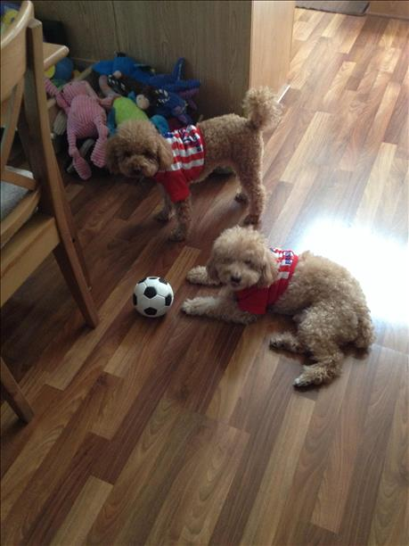 Team USA fans!  Keep sending in your World Cup fan photos! <span class=meta>photo submitted via uReport</span>