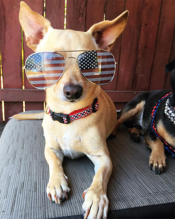 """<div class=""""meta image-caption""""><div class=""""origin-logo origin-image none""""><span>none</span></div><span class=""""caption-text"""">This dog is shown """"chillin'"""" before a fireworks show.  See how people celebrated 4th of July festivities all around the Bay Area!  Thanks for sharing your photo with ABC7. (Photo sent to KGO-TV by fortheloveofjackson/Instagram)</span></div>"""
