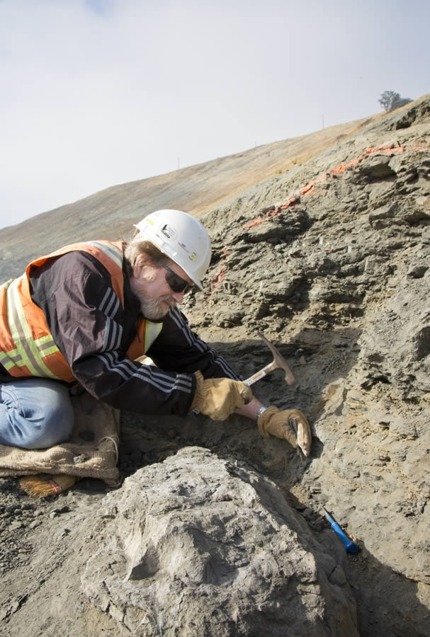 Paleontologists remove fossils near the Calaveras Dam Replacement Project Site.  An amazing treasure trove of fossils millions of years old are being discovered in Fremont. <span class=meta>Courtesy of San Francisco Public Utilities Commission</span>