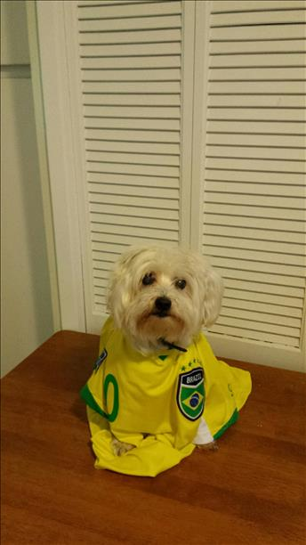 Kikkoman of Benicia cheering Brazil on! Keep sending in your World Cup fan photos! <span class=meta>photo submitted by Pam Chee via uReport</span>