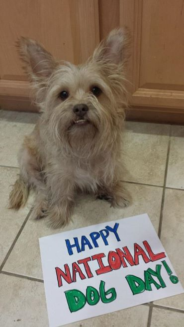 <div class='meta'><div class='origin-logo' data-origin='none'></div><span class='caption-text' data-credit='Photo submitted by Jennifer Barreda via Facebook'>Happy Doggie Day from Dukey!  ABC7 News viewers are celebrating National Dog Day by sharing photos of their beloved pups.</span></div>