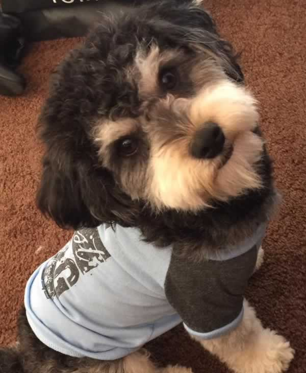 "<div class=""meta image-caption""><div class=""origin-logo origin-image none""><span>none</span></div><span class=""caption-text"">In honor of National Dog Day, ABC7 viewers are sharing pictures of their furry friends! Show us your pooch by tagging pics #abc7now! (Photo submitted to KGO-TV by Julianne Gonzalez/Facebook)</span></div>"