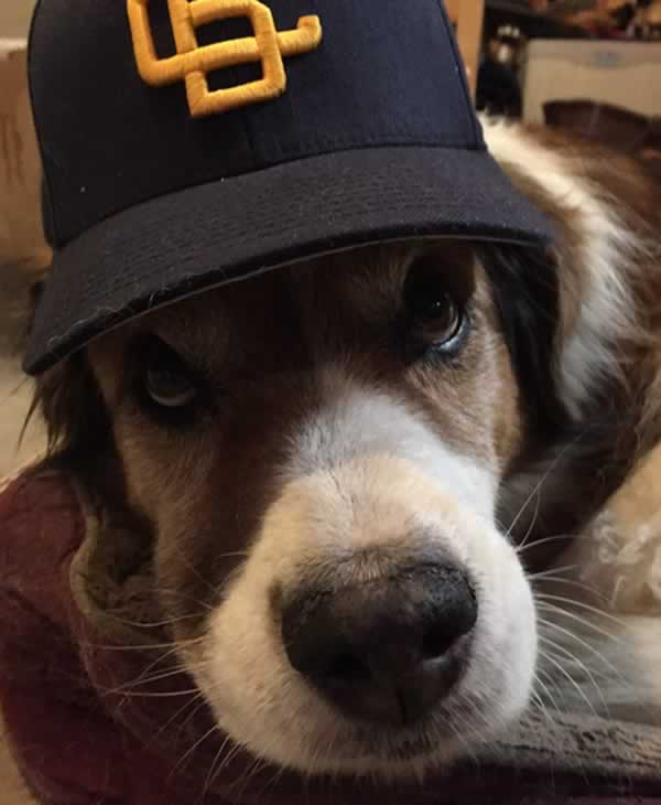 "<div class=""meta image-caption""><div class=""origin-logo origin-image none""><span>none</span></div><span class=""caption-text"">In honor of National Dog Day, ABC7 viewers are sharing pictures of their furry friends! Show us your pooch by tagging pics #abc7now! (Photo submitted to KGO-TV by BrianUtt/Twitter)</span></div>"