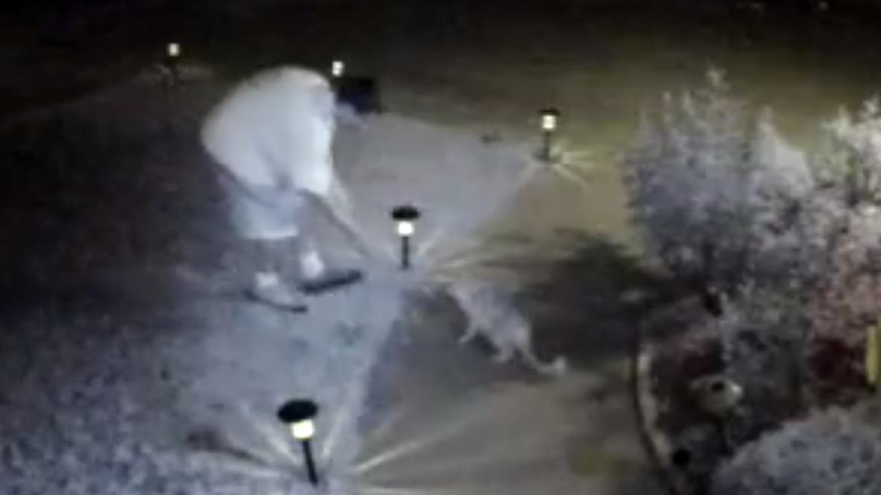 This image from surveillance video shows GoGo, a 17-year-old cat who was allegedly catnapped from the front yard of his home in San Jose, Calif. on September, 21, 2015.