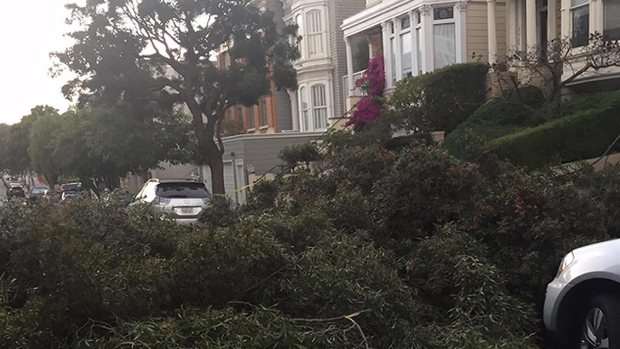 Gusty winds knocked down a large tree in San Francisco on Saturday, October 3, 2015.