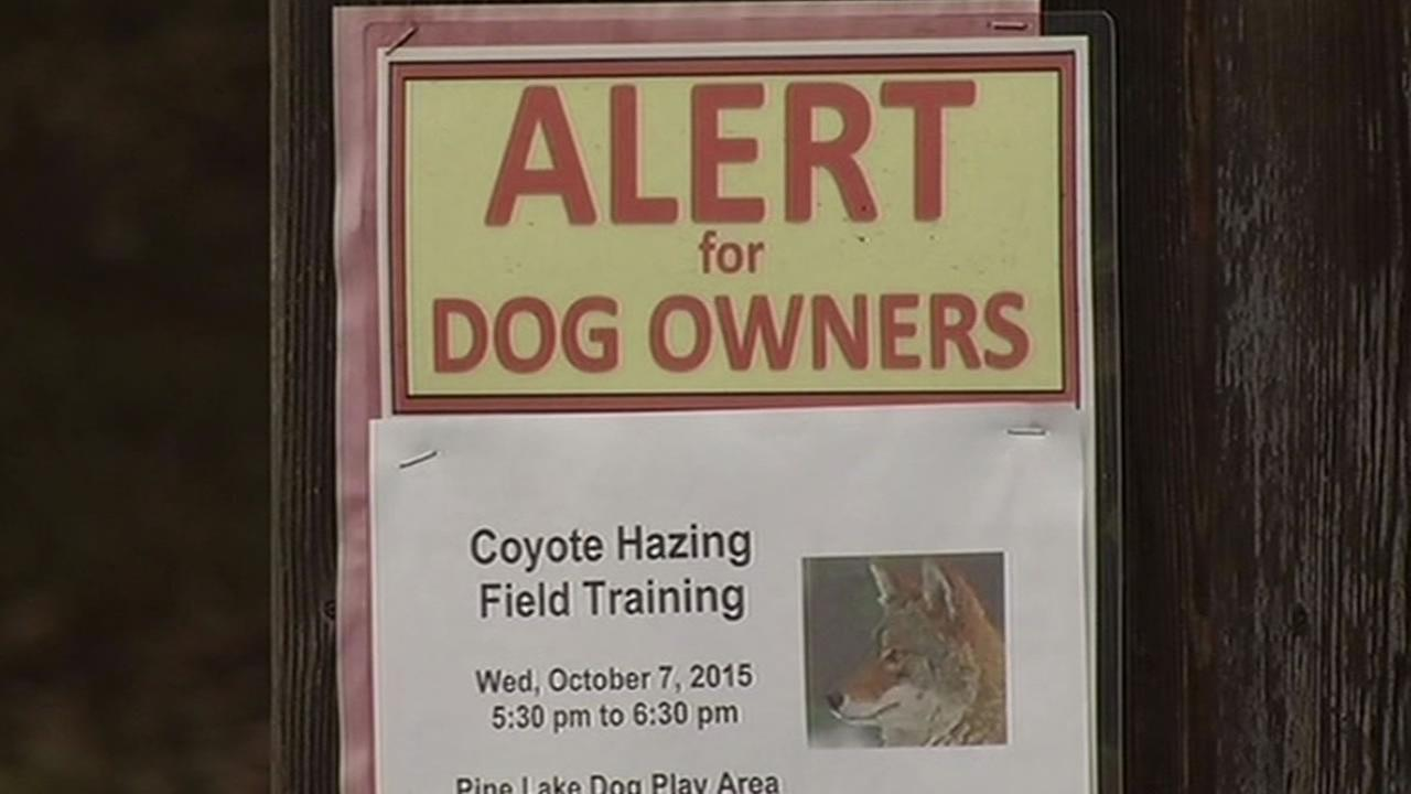 Coyote training flyer