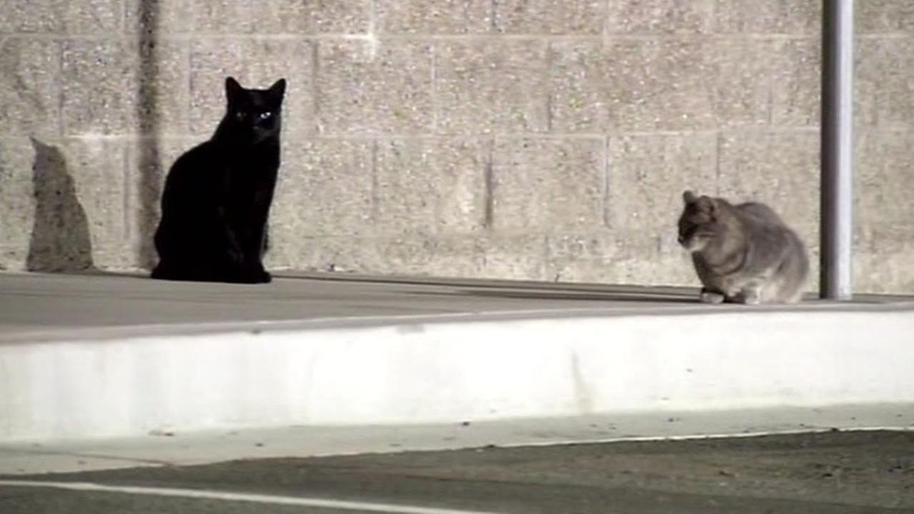 two feral cats in Antioch
