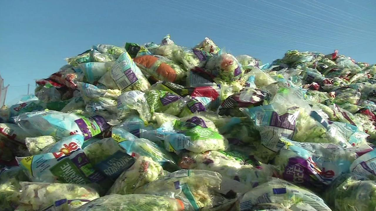 This undated image shows wasted bags of lettuce.