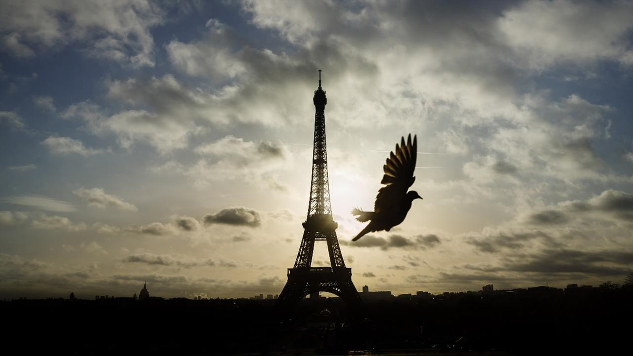 A bird flies in front of the Eiffel Tower in Paris.