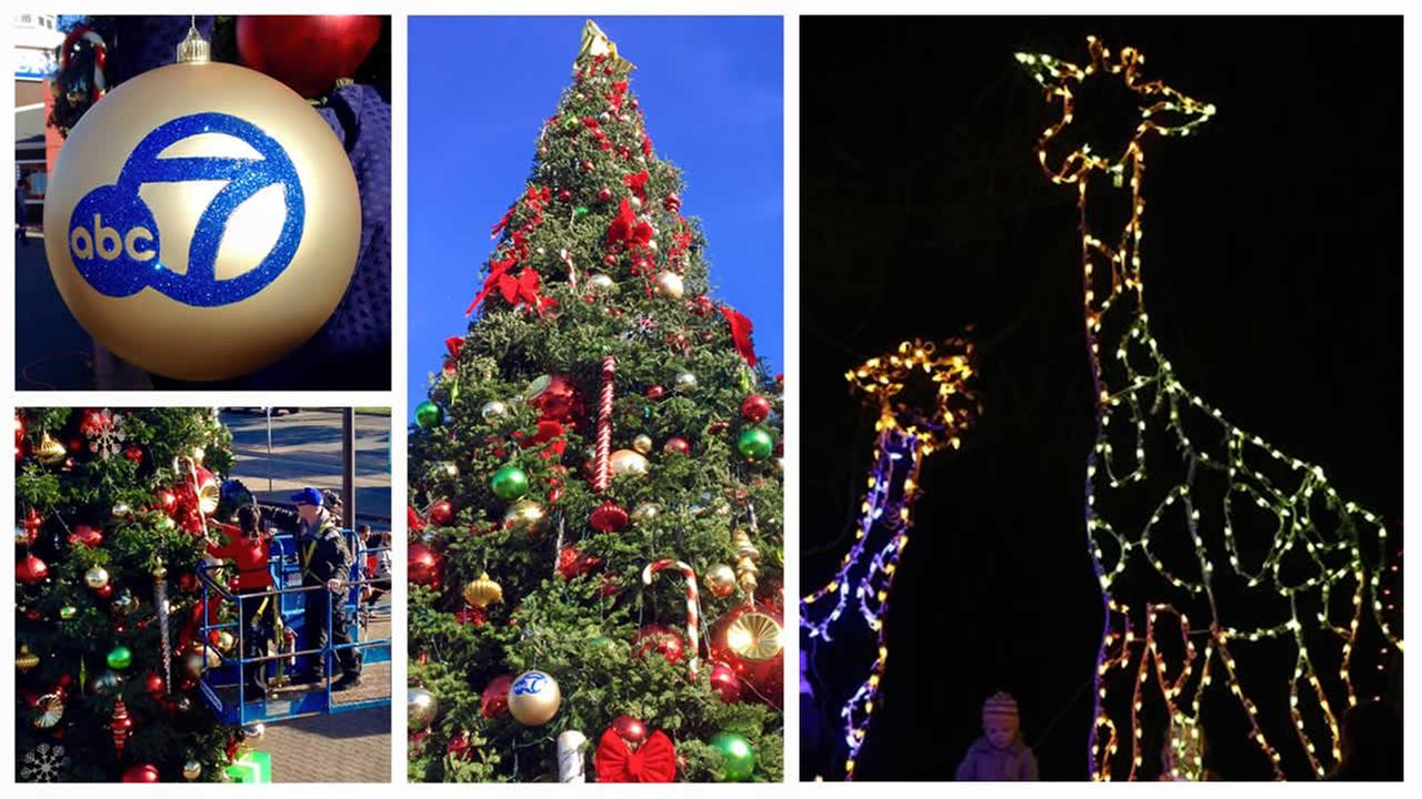 ABC7 News Anchor Ama Daetz puts the finishing touches on tree at Pier 39 - left.  Children explore ZooLights in Oakland, a synchronized light show set to holiday music - right.