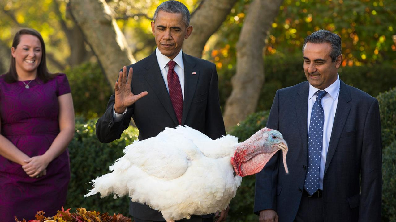 President Obama pardons National Thanksgiving Turkey Abe, during a ceremony in the Rose Garden of the White House in Washington, Wednesday, Nov. 25, 2015.