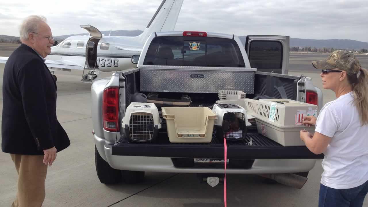 Livermore Dog Rescue