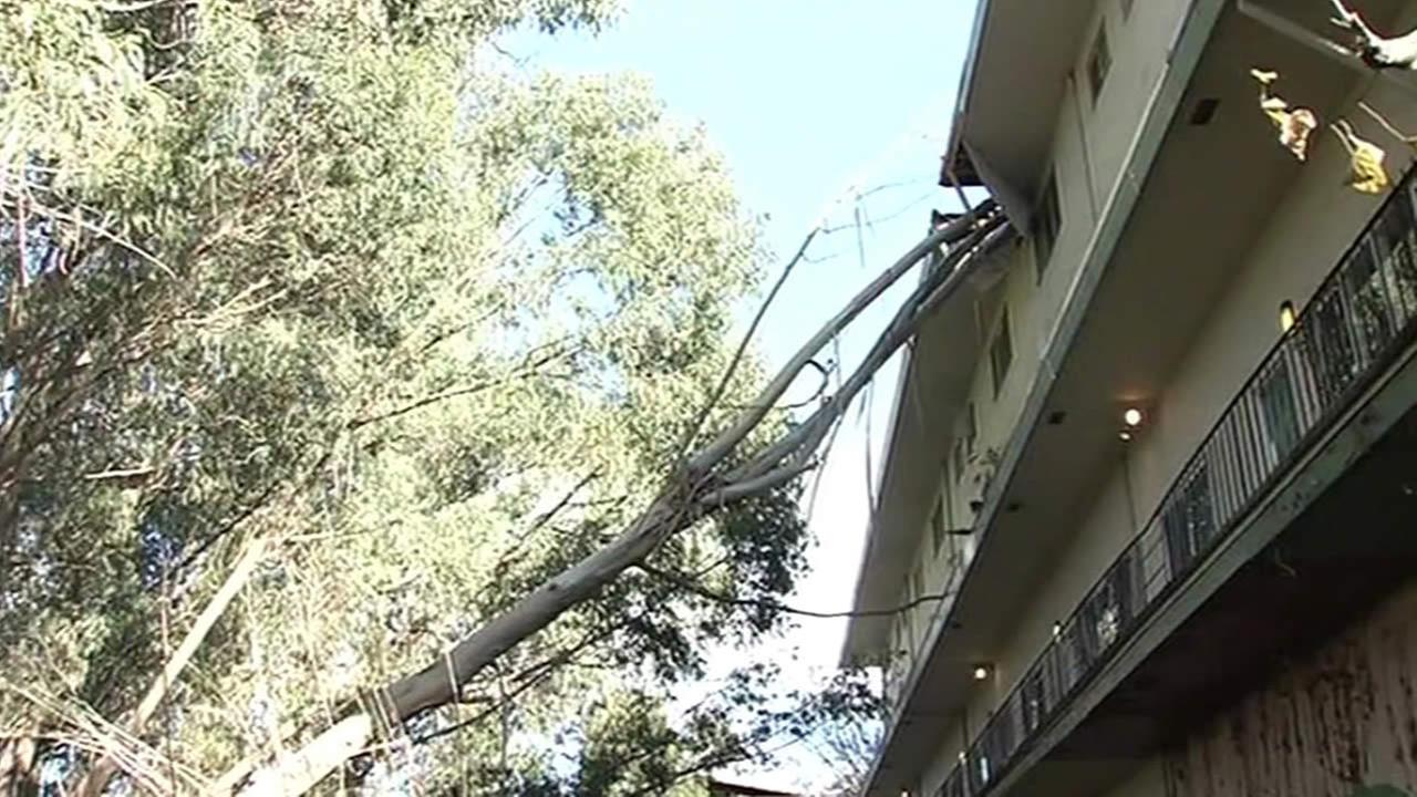 large Eucalyptus tree falls onto Oakland apartment