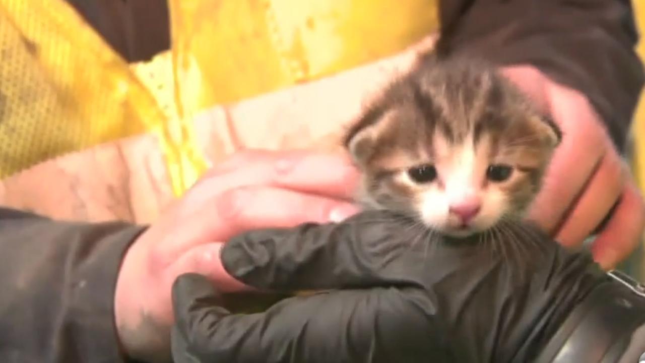 Kitten rescued from conveyor belt
