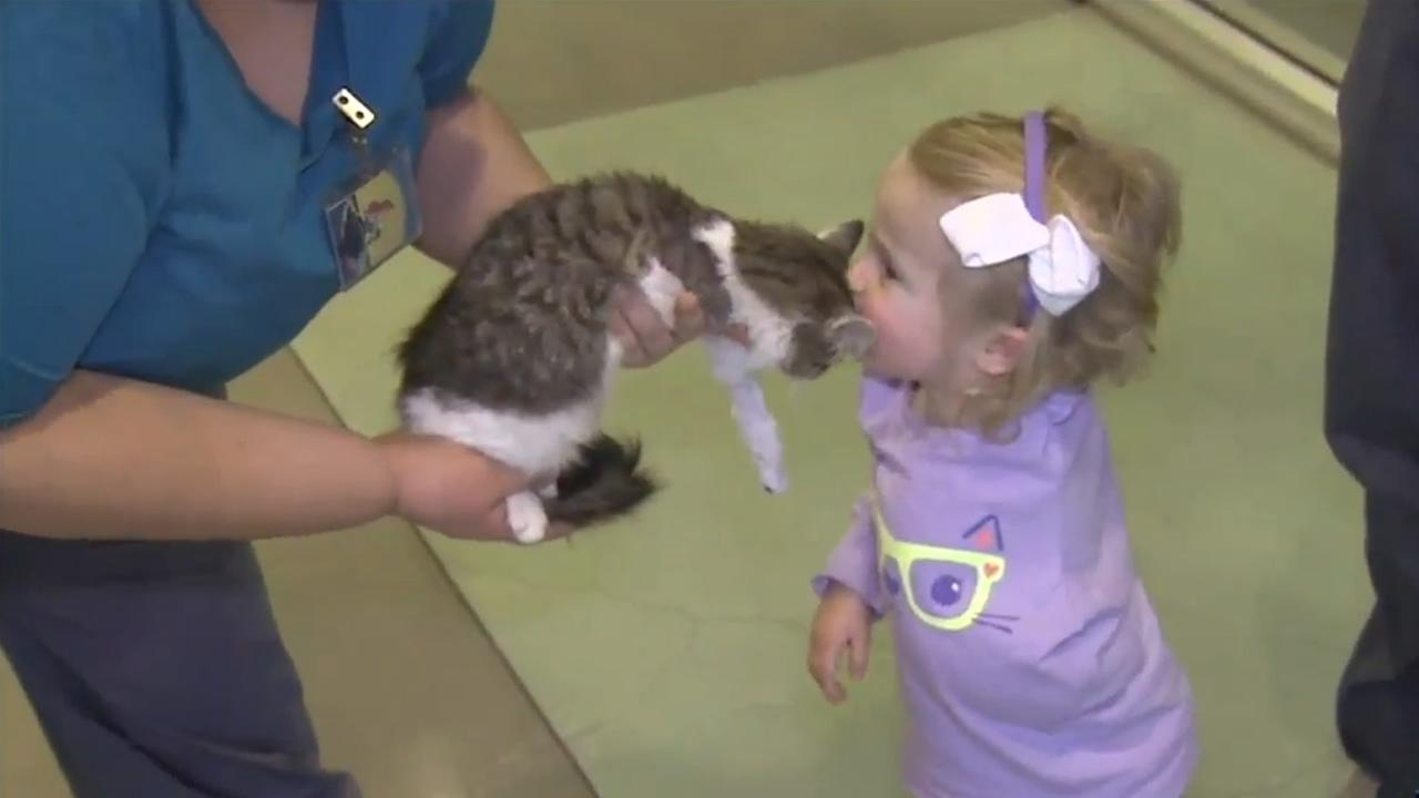 A three-legged kitten named Doc was adopted by the family of 2-year-old Scarlette Tipton in Jurupa Valley, Calif. on Wednesday, December 30, 2015.