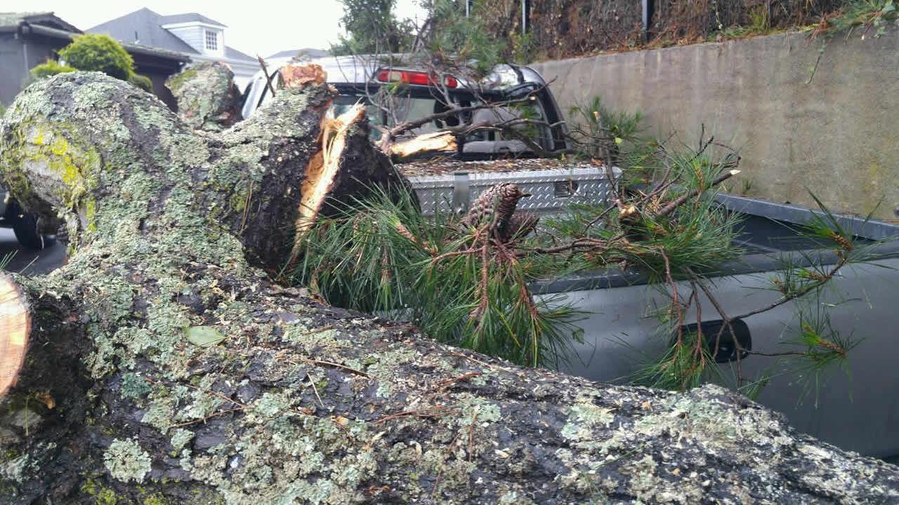 A heavy tree limb fell onto a truck in Belvedere, Calif. on Tuesday, January 5, 2016.KGO-TV